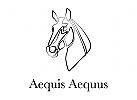 Reiten, Sport, Stall, Hof, Tier, Zentrum, Unterricht, Dressur, Ausbildung, Pferdearzt