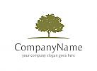 Baum Logo, Natur Logo, Eiche Logo, Vertrauen Logo