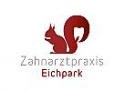 Zähne, Zahnärzte, Zahnmedizin, Zahnpflege, Zahnarzt, Zahn, Logo, Eichhörnchen