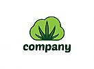Ökologie, Natur, Marihuana, Cannabis