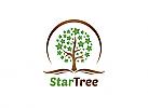 Ö, Ökologie, Zeichen, Baum, Stern, Buch, Blatt, Schule, Bildung, Kindergarten Logo